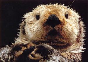 Otter Gel